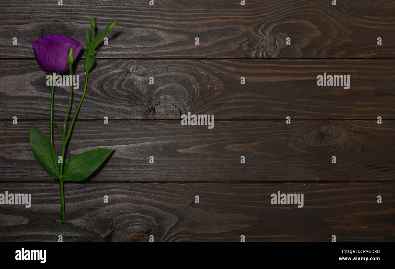 Violet flowers - eustoma, on a brown wooden background. Copy space. - Stock Image