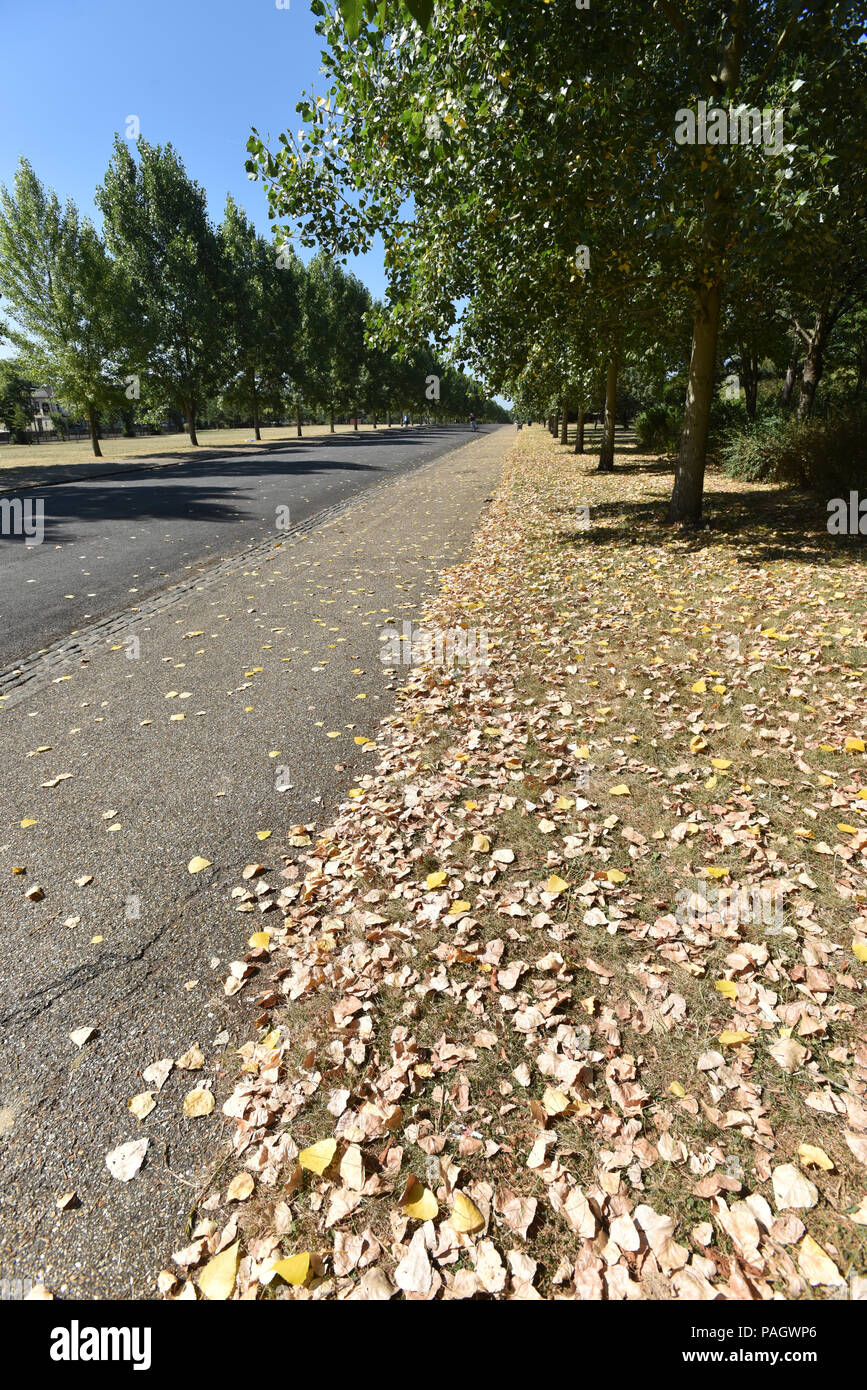 Finsbury Park, London, UK. 23rd July 2018. Dry grass and leaves in Finsbury Park during the heatwave. Credit: Matthew Chattle/Alamy Live News Stock Photo