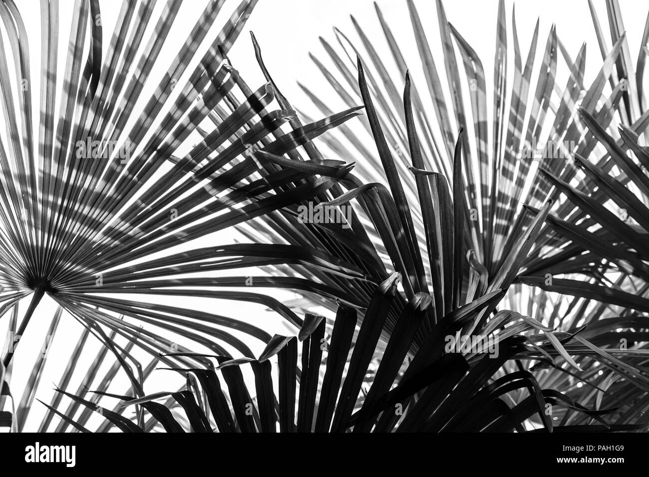 Palm tree leaves at jungle modern background stock image