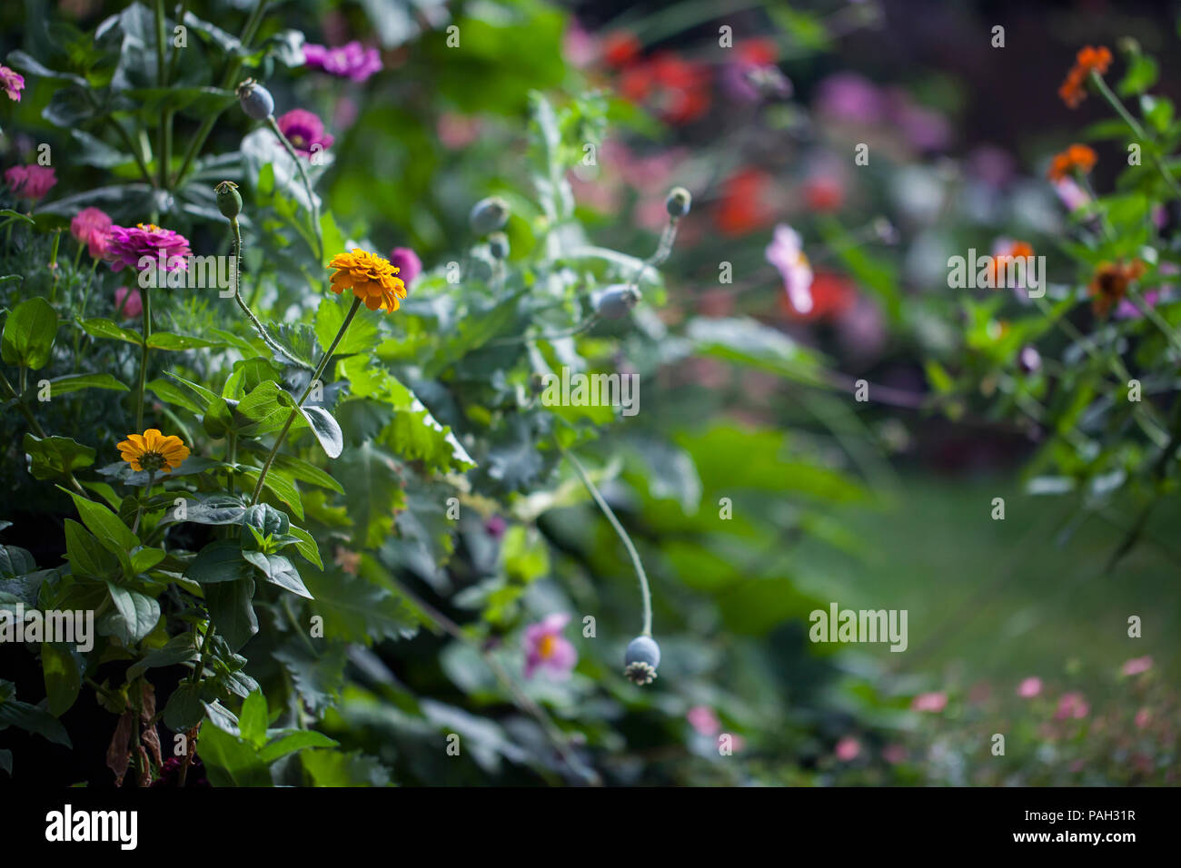 Garden in summer in full bloom - Stock Image