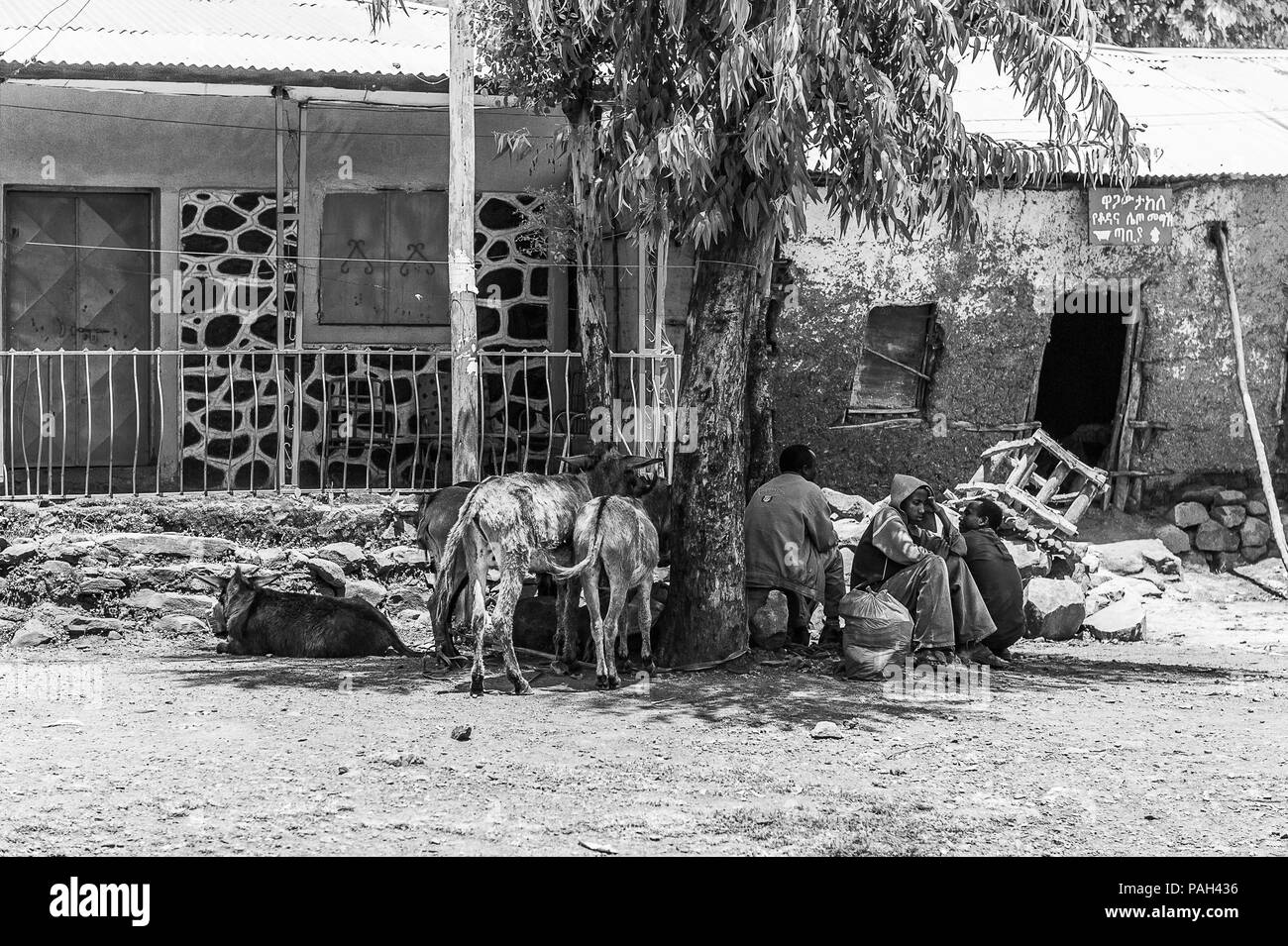 OMO, ETHIOPIA - SEPTEMBER 21, 2011: Unidentified Ethiopian people with donkeys in the street. People in Ethiopia suffer of poverty due to the unstable Stock Photo