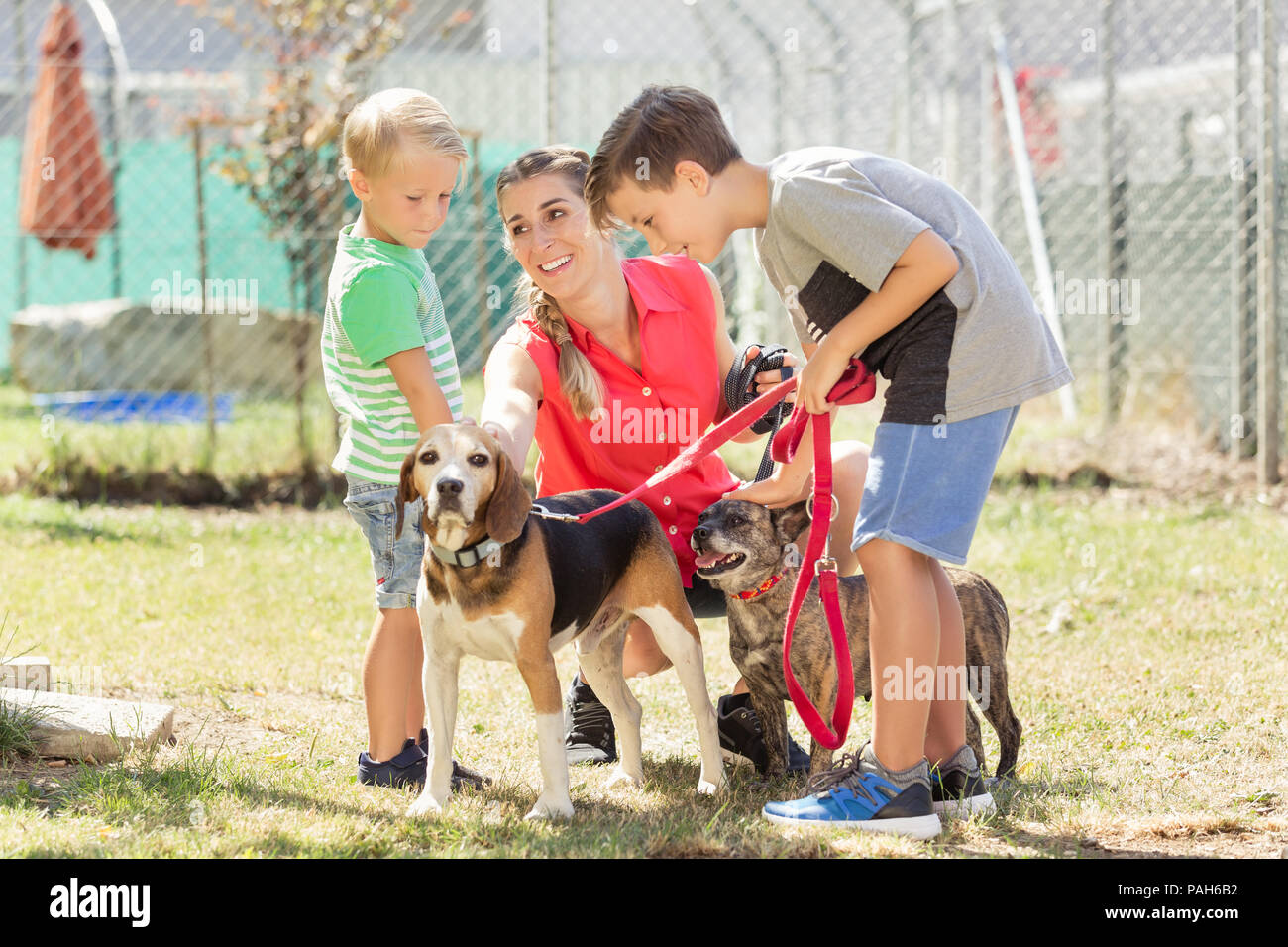 Mom with her sons walking dogs of an animal shelter - Stock Image