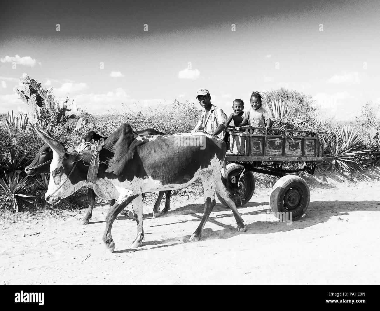 ANTANANARIVO, MADAGASCAR - JULY 3, 2011: Unidentified Madagascar man rides the cow carriage with his children. People in Madagascar suffer of poverty  - Stock Image