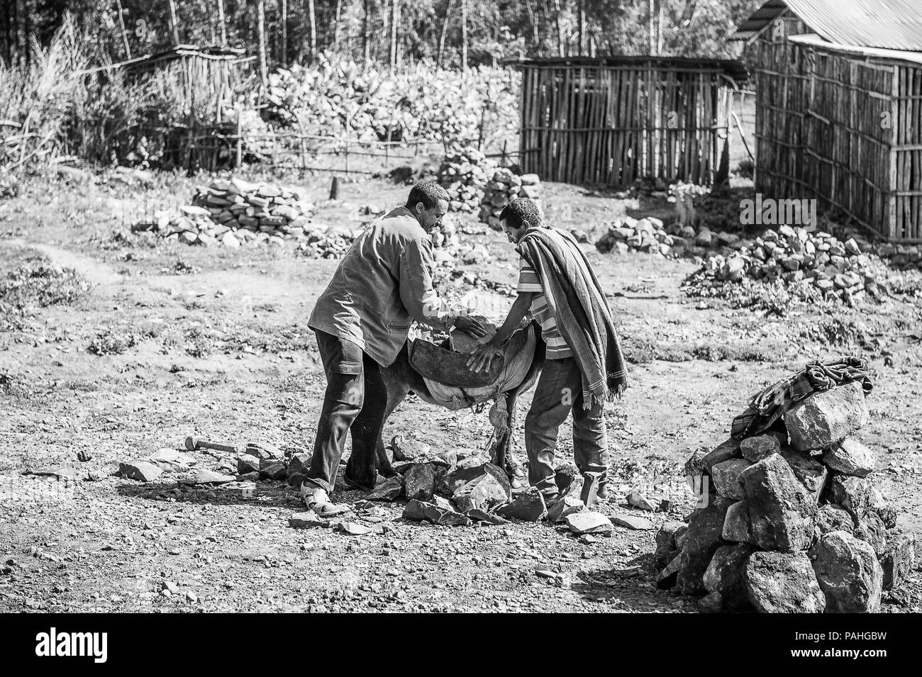 OMO, ETHIOPIA - SEPTEMBER 21, 2011: Unidentified Ethiopian men charge donkeys. People in Ethiopia suffer of poverty due to the unstable situation Stock Photo
