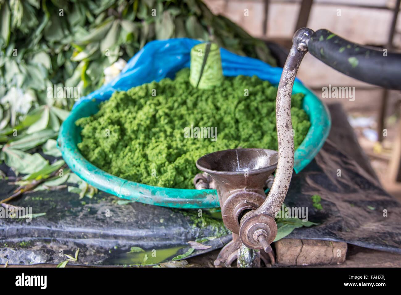 Ground leaves, Ganta, Liberia - Stock Image