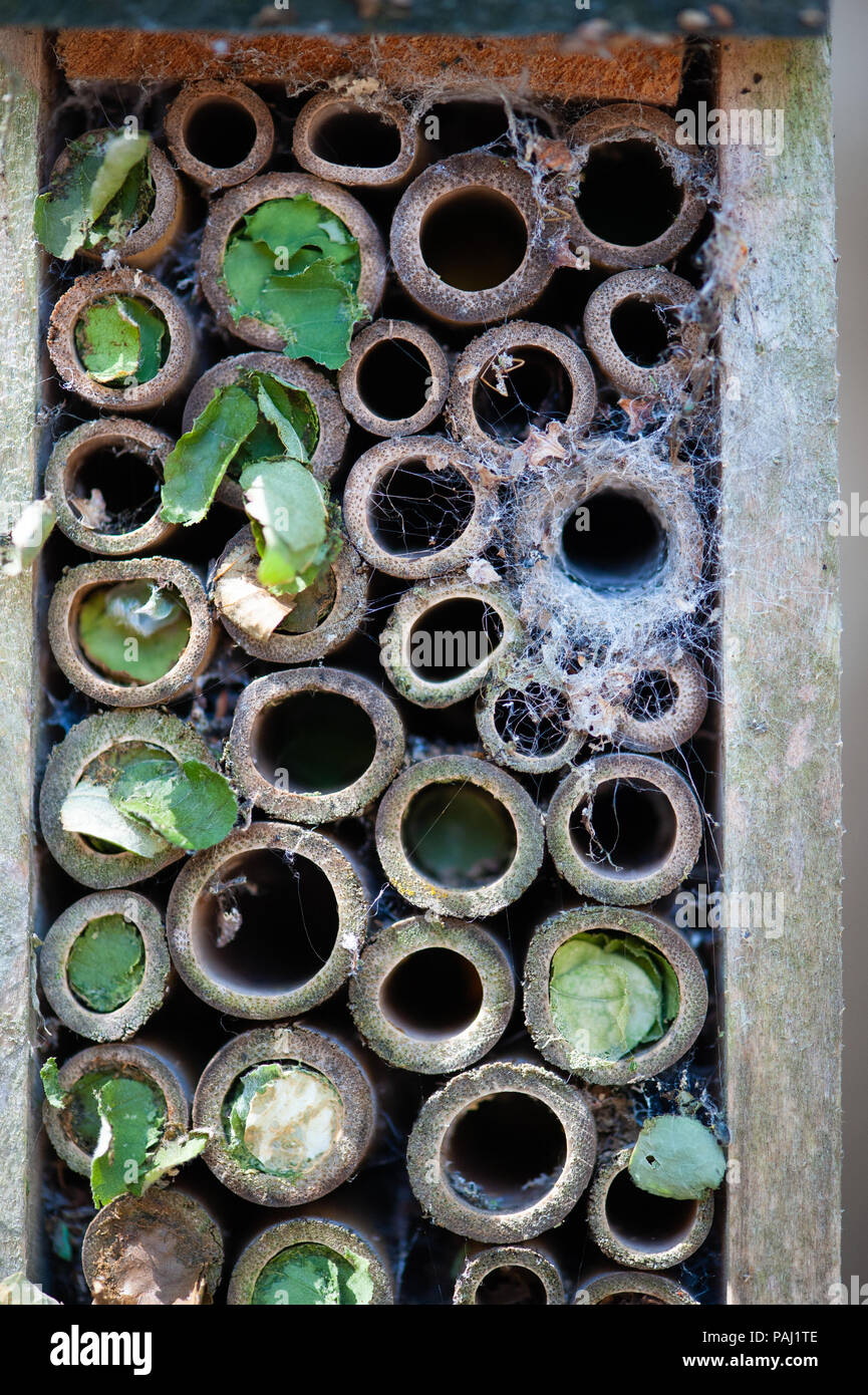 A small 'Bug Hotel' with several occupants - Stock Image