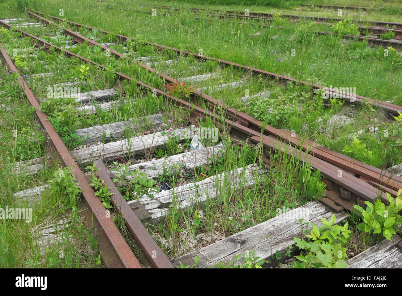 A close up view of the overgrown railtracks at the New Brunswick Railway Museum, Hillsborough - Stock Image