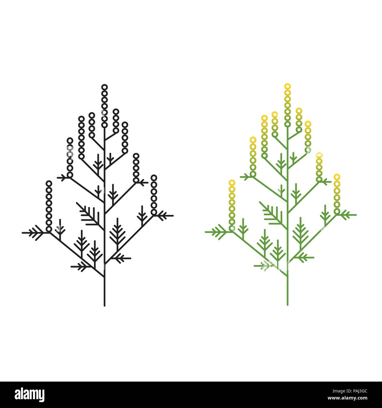 Ragweed minimalistic line art painted in two styles Stock Vector