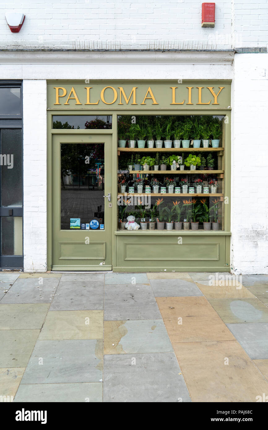 Small green painted shop with pot plants in window - Stock Image