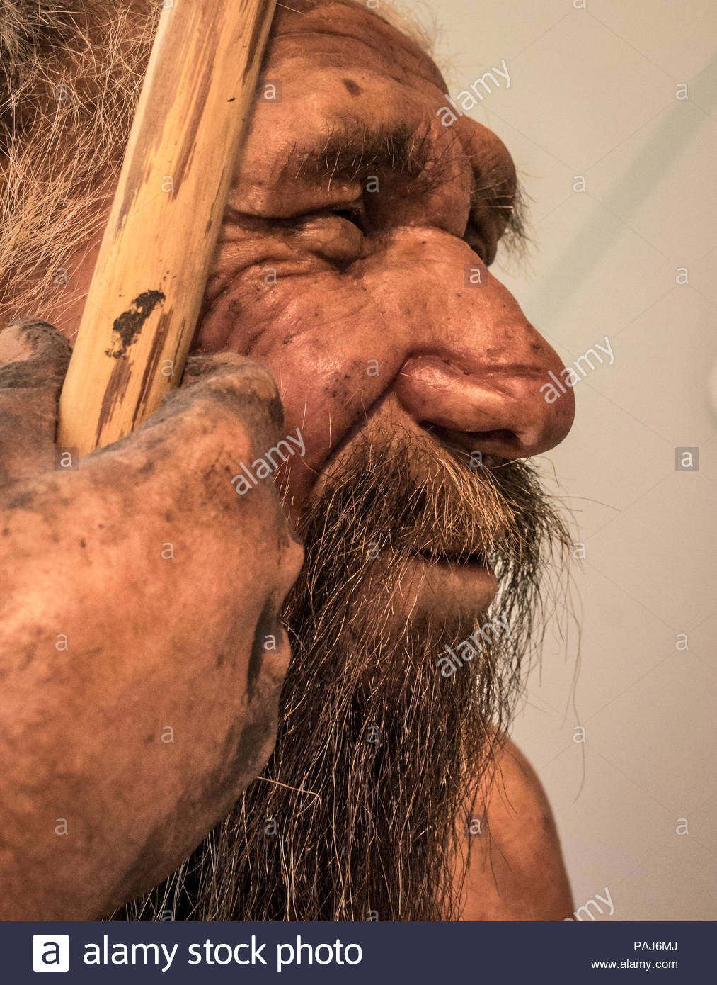 reconstruction of a Neanderthal man. Model of male Homo neanderthalensis in  the permanente exhibition of the famous Science Museum of Trento (MuSe  Stock Photo - Alamy
