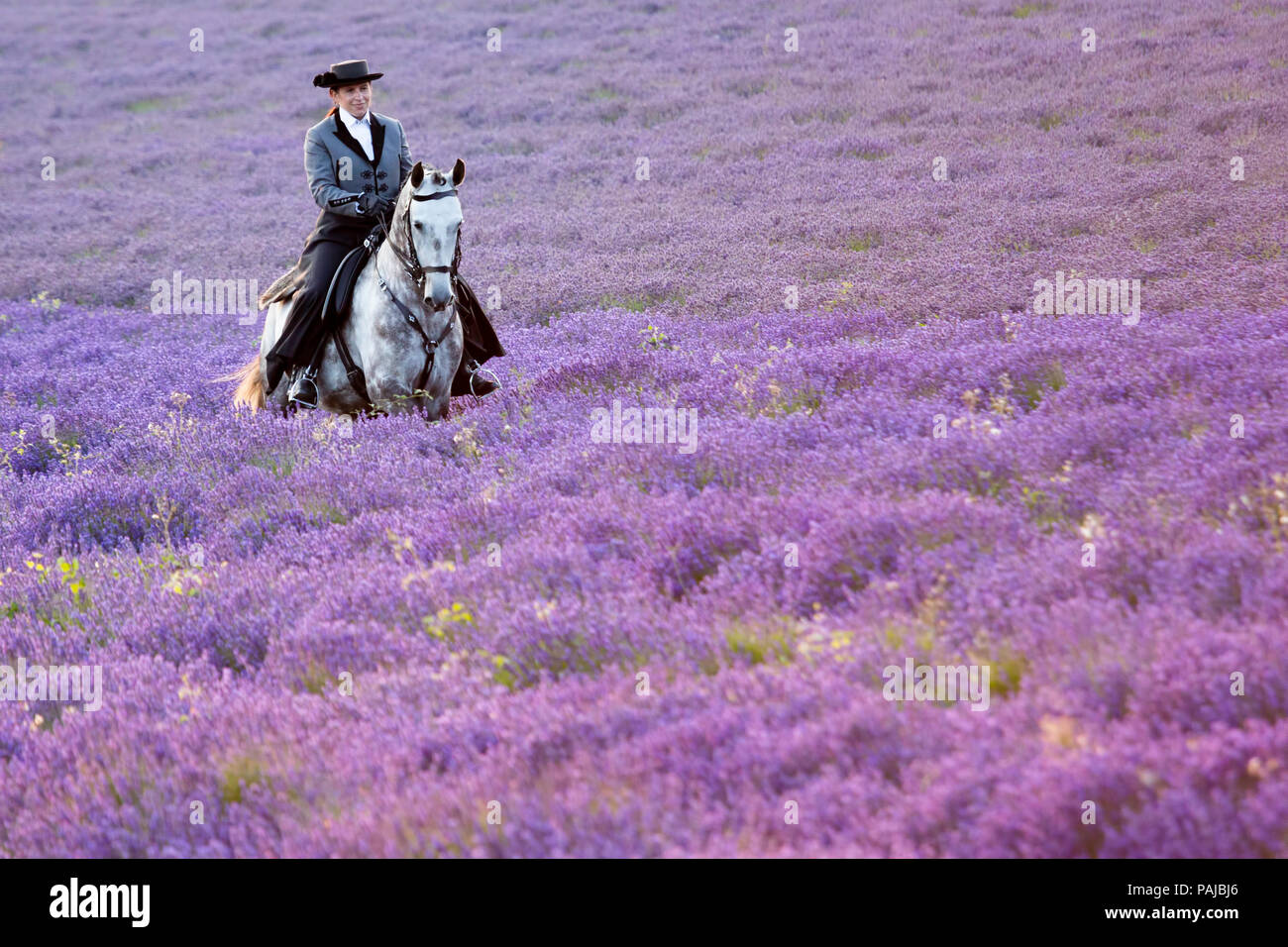 Woman wearing traditional costume riding an Andalusian horse through a field of lavender at The Hop Farm, Darent Valley, Kent, UK. - Stock Image