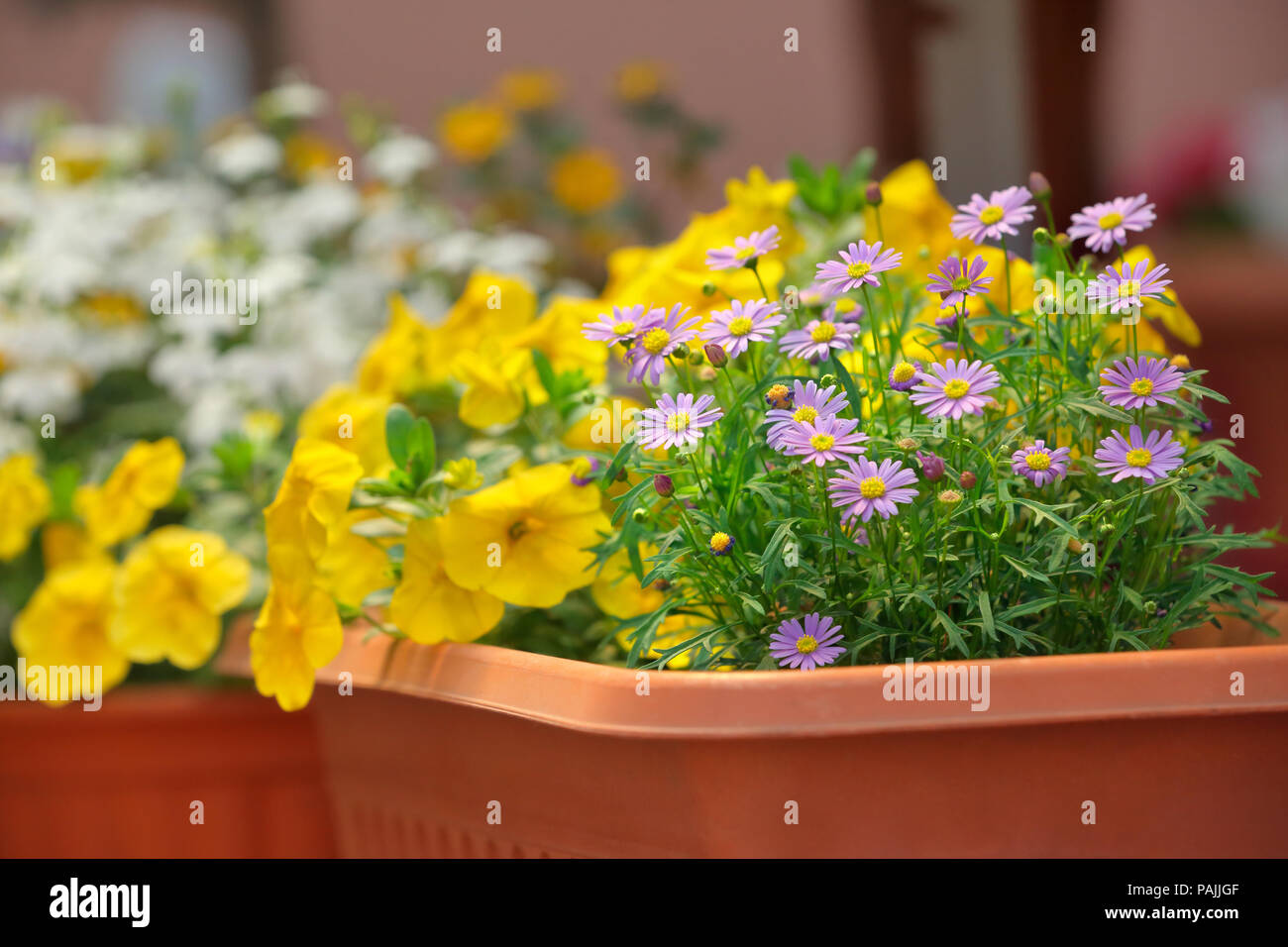Summer blooming flowers in window box - Stock Image
