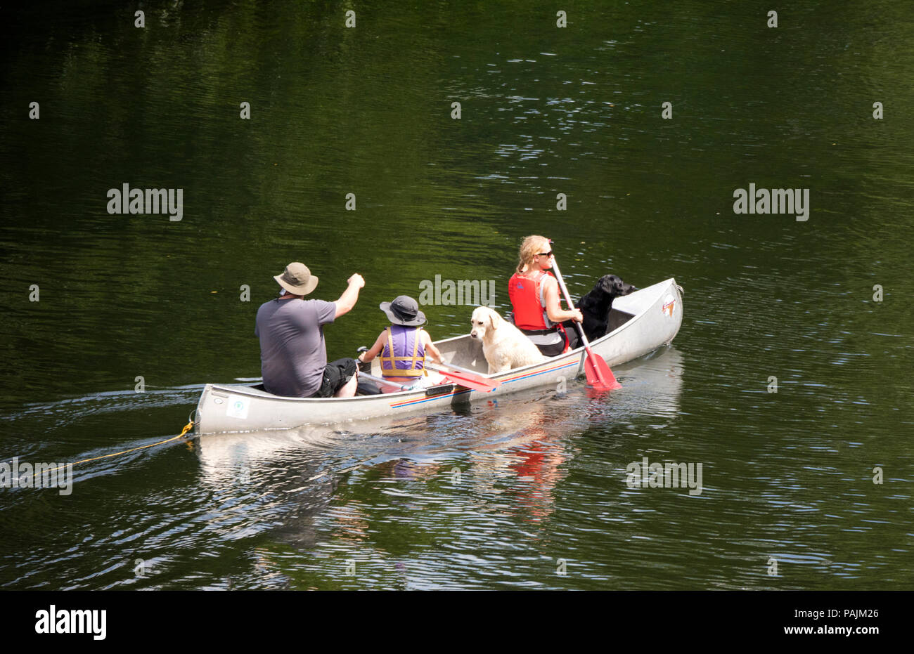 Family canoeing with pet dogs on the River Wye, Herefordshire, England, UK - Stock Image
