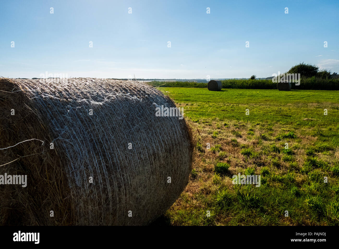 landscape of an agriculture field with hay rolls with a bright sun