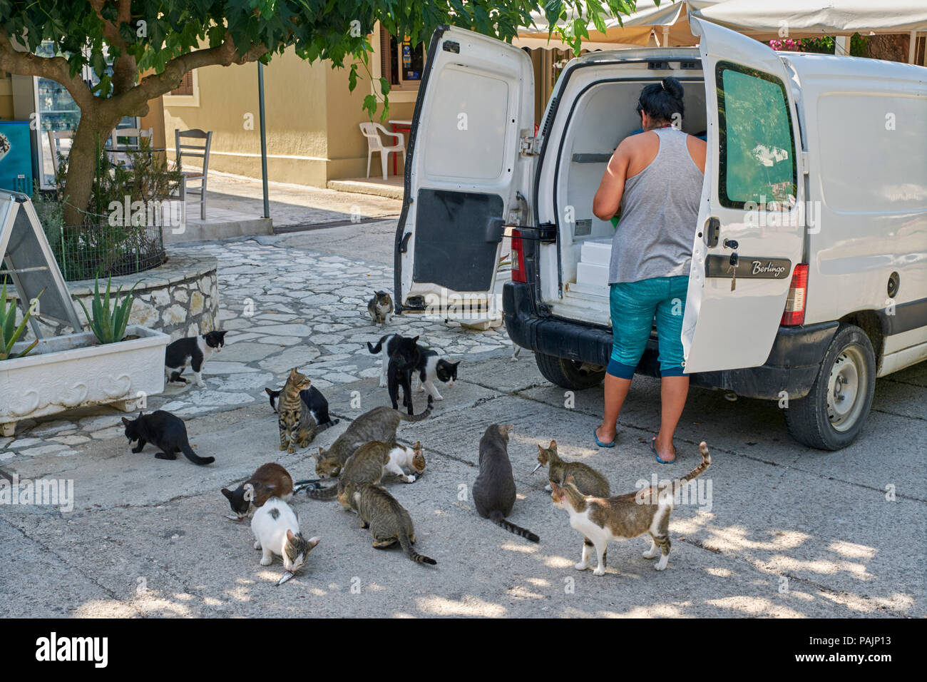 Morning fish delivery to restaurant in Assos with hopeful cats. Cephalonia, Ionian Islands, Greece. - Stock Image