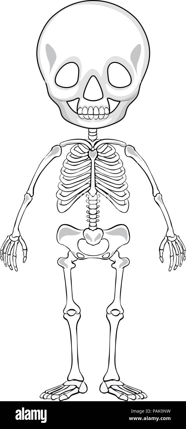 Outline Drawing Of A Human Skeleton Illustration Stock Vector Art