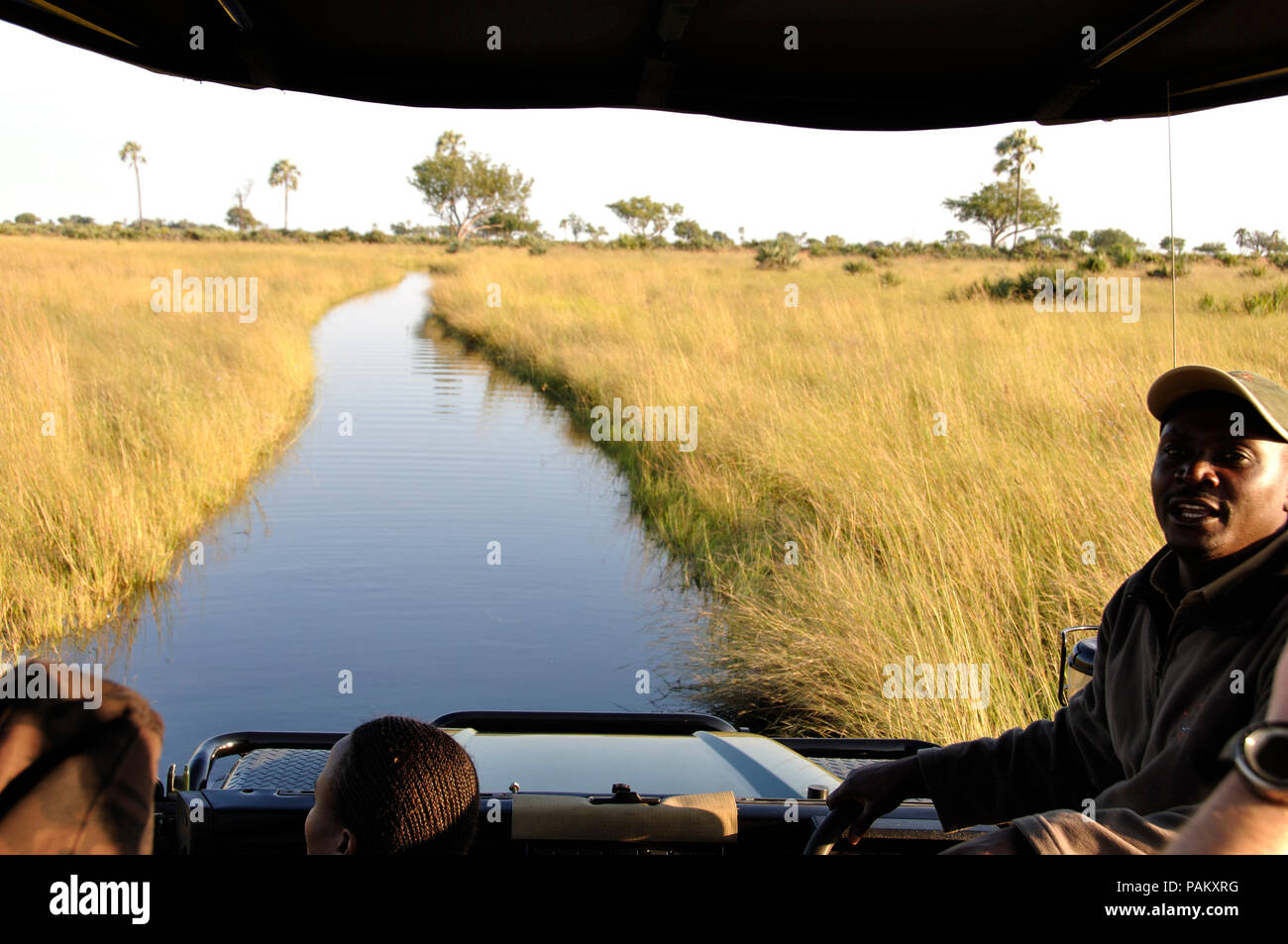 Game Drive in the flooded Okavango-Delta-swamps with the Jao Wilderness Game Ranger - Stock Image