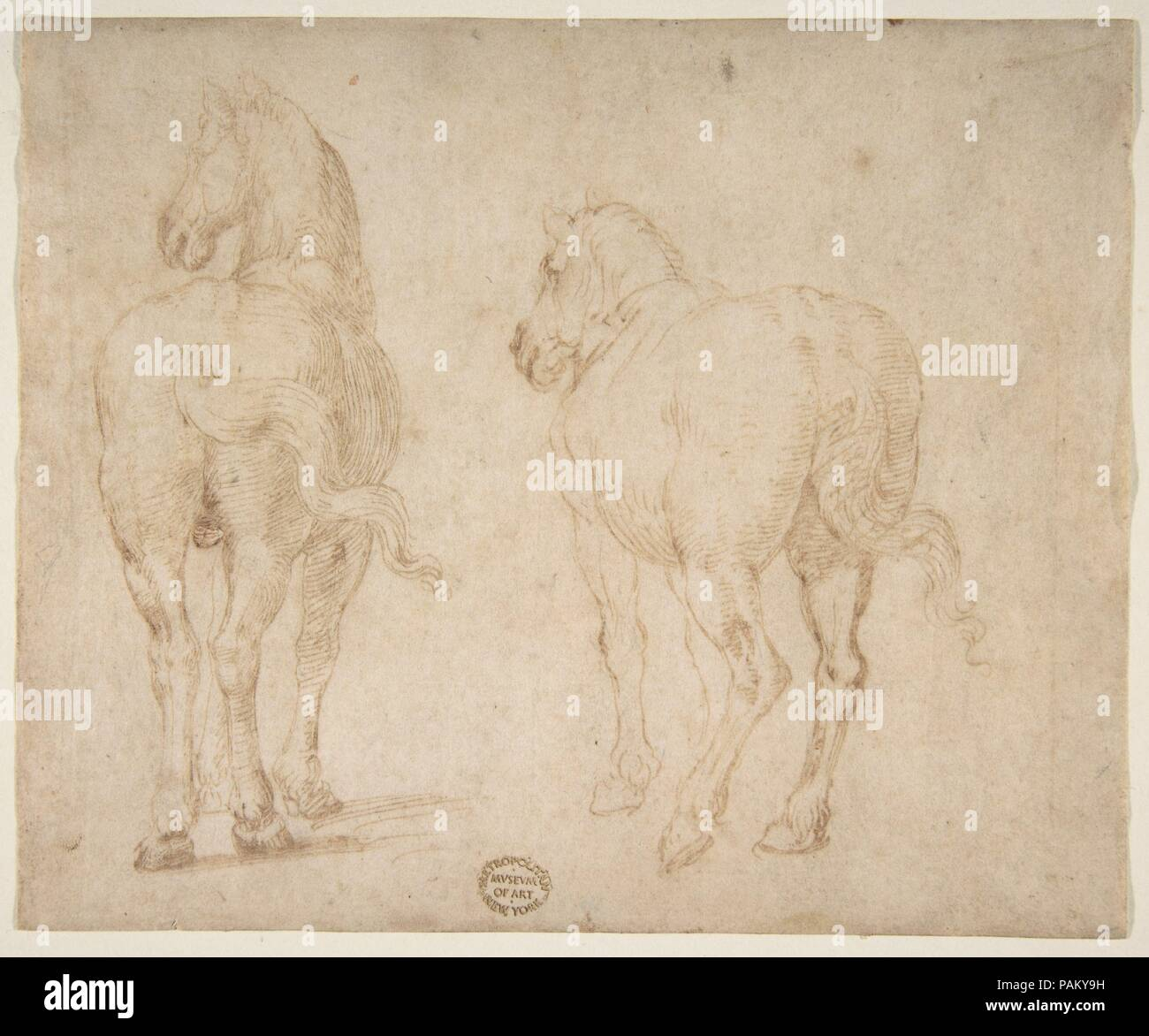 Horses. Artist: Parmigianino (Girolamo Francesco Maria Mazzola) (Italian, Parma 1503-1540 Casalmaggiore). Dimensions: 5 3/4 x 7in. (14.6 x 17.8cm). Former Attribution: Formerly attributed to Francesco Allegrini (Italian, Cantiano (?) 1615/20-after 1679 Gubbio (?)). Date: 1530-40.  Previously assigned to a seventeenth-century Italian artist, Francesco Allegrini, the sheet has been reattributed, based on stylistic considerations, to a major artist who lived more than a century earlier.  The handling of the pen and the anatomical type of the horses are entirely characteristic of Parmigianino. Par Stock Photo
