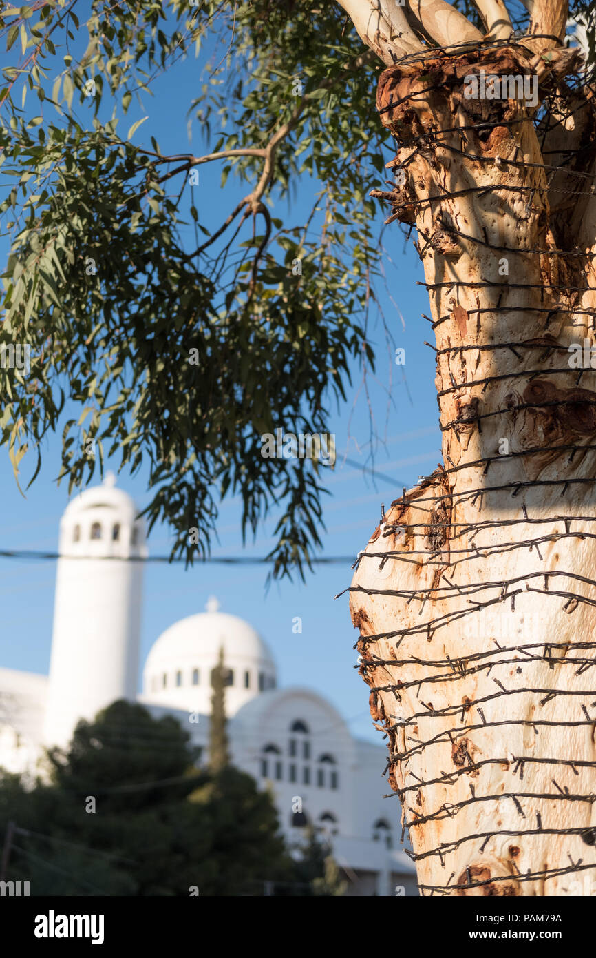 Olive tree wrapped with small electric lights for evening in front of an Orthodox Catholic Church and blue sky. Glyfada, East Attica, Greece. Stock Photo