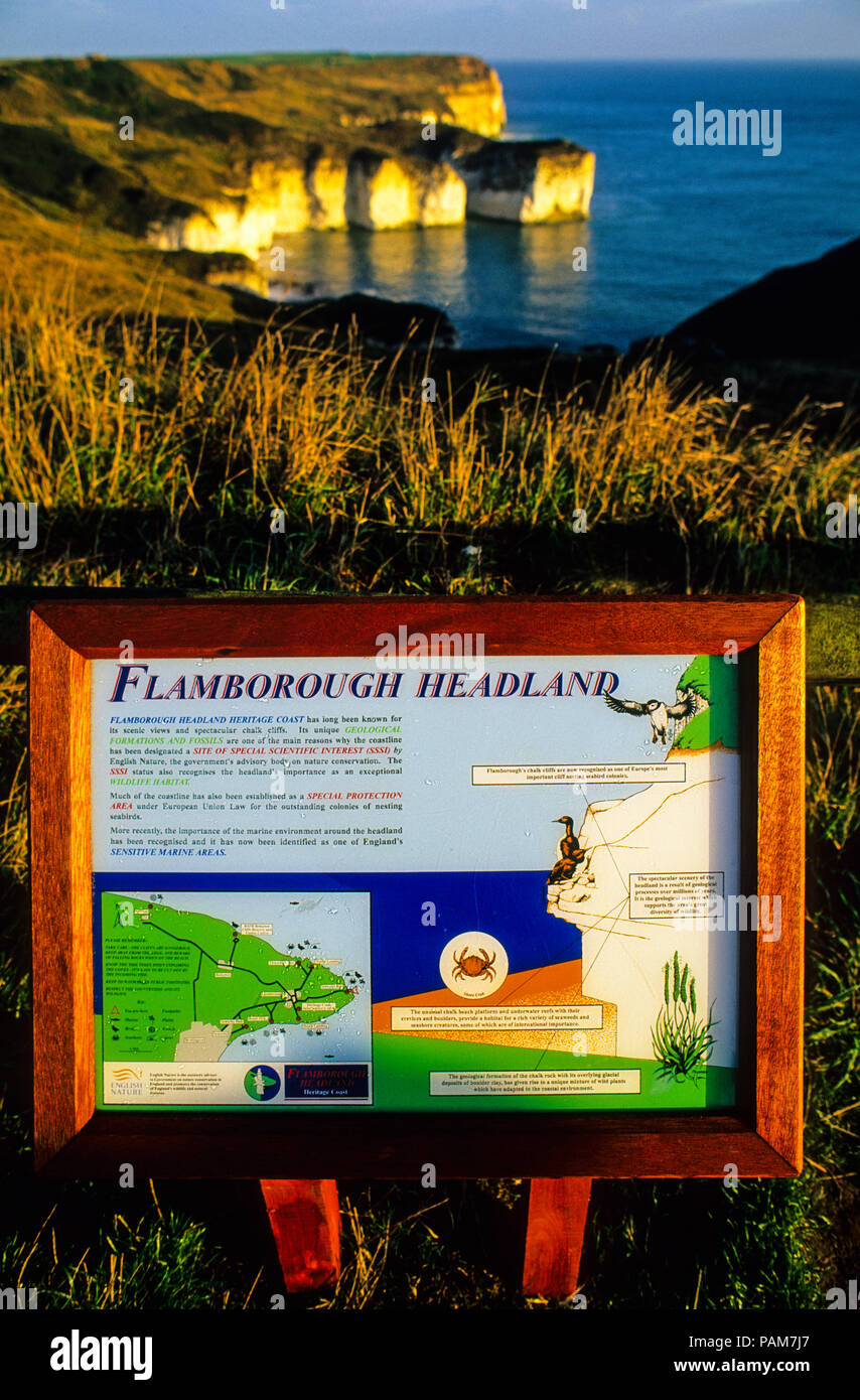 Flamborough Head,  Special Area of Conservation, Important Bird Nesting Sight, Yorkshire, England, UK, GB. - Stock Image