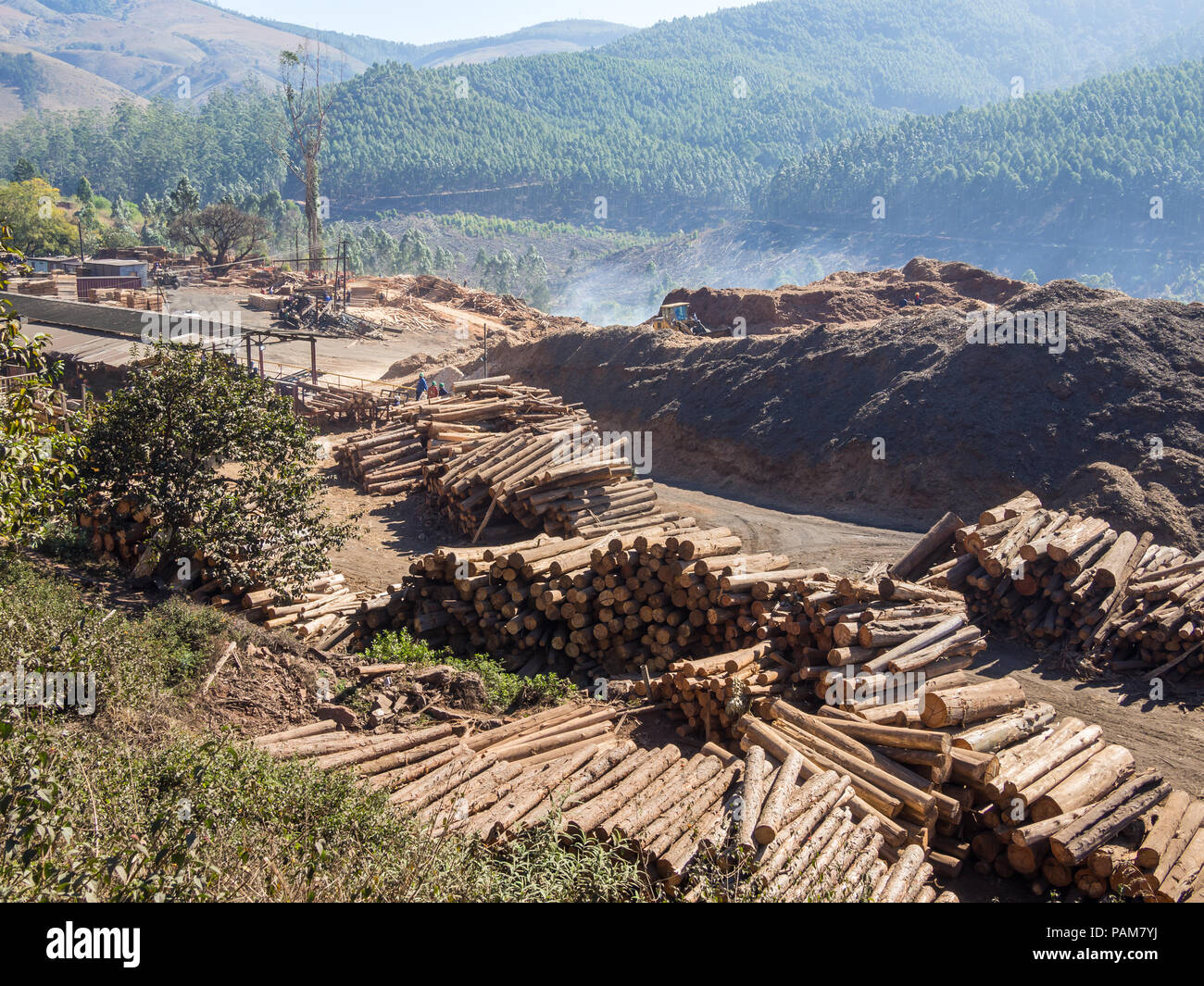 Tree logging in rural Swaziland with heavy machinery, stacked timber and forest in background, Africa. Stock Photo