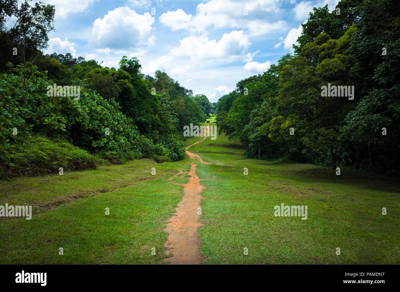 Dirt hiking & mountain biking trail in Bukit Timah Nature Park, leading to Macritchie Reservoir - Stock Image