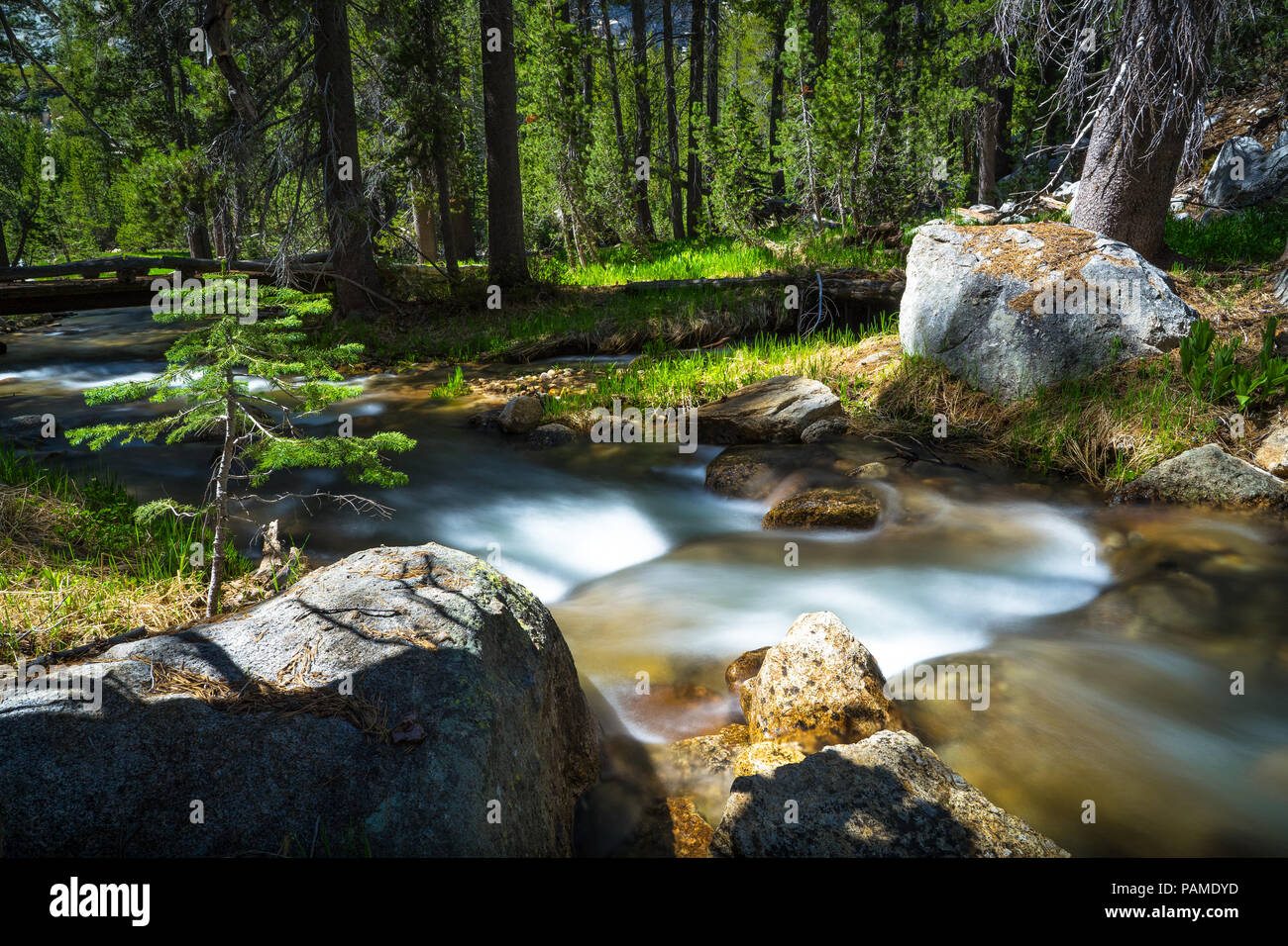 Sunny, smooth  flowing Tenaya Creek, in the forest near Tioga Pass - Yosemite National Park - Stock Image