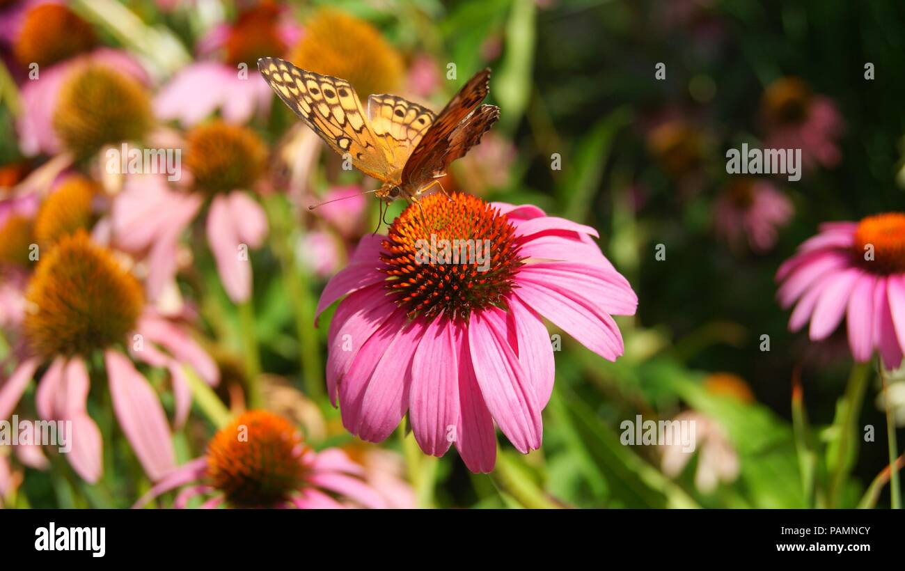Pink flowers tumblr stock photos pink flowers tumblr stock images pink flower with butterfly on it stock image mightylinksfo