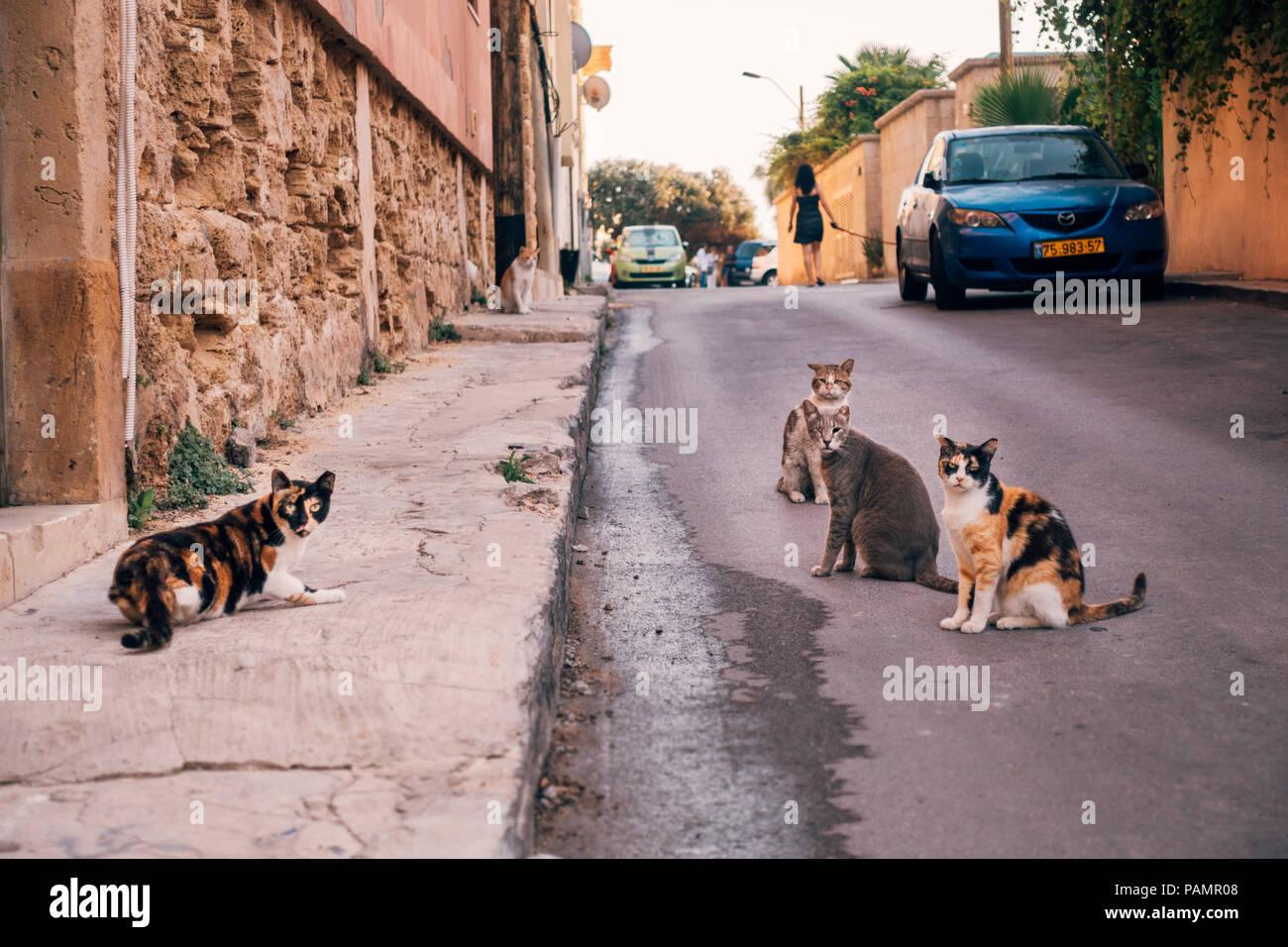 four stray cats eye the camera on a sleepy street in Jaffa, Israel - Stock Image