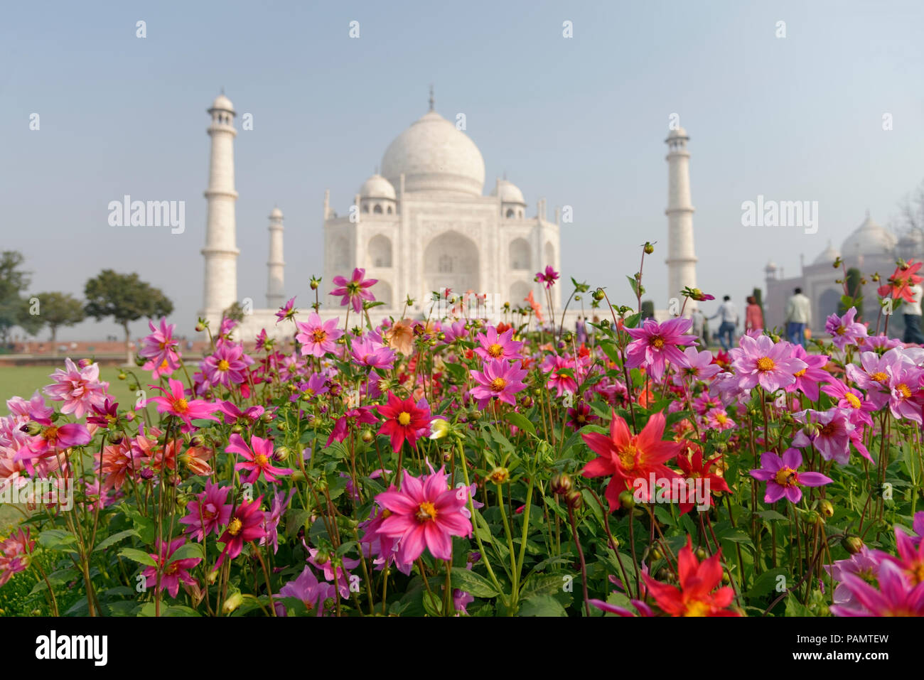 Flowers in focus on the background of OUT OF FOCUS Taj mahal at Agra A UNESCO World Heritage Site, A monument of love, Agra, Uttar Pradesh, India. - Stock Image