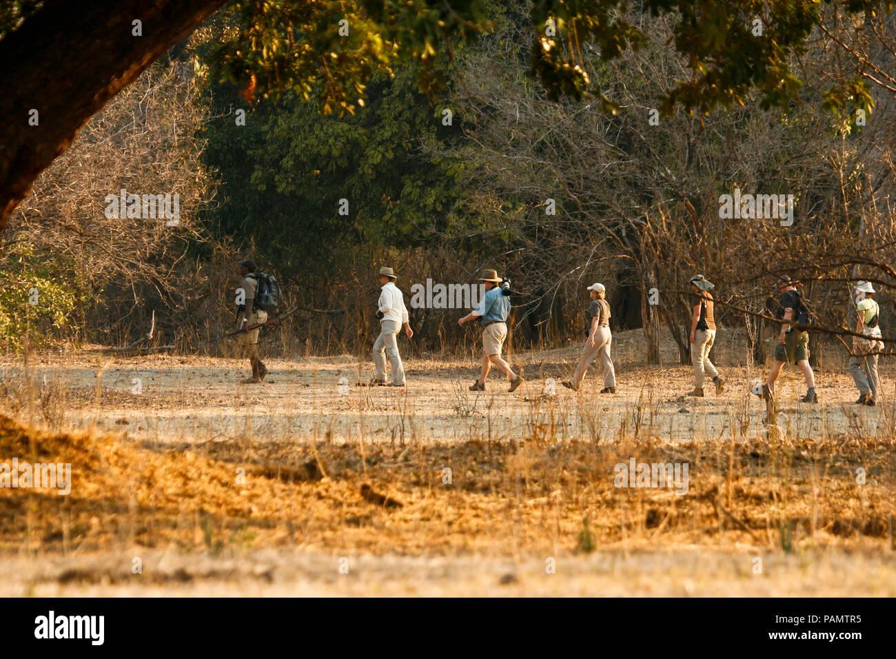 Tourists on Walking Safari. Mana Pools National Park. Zimbabwe - Stock Image