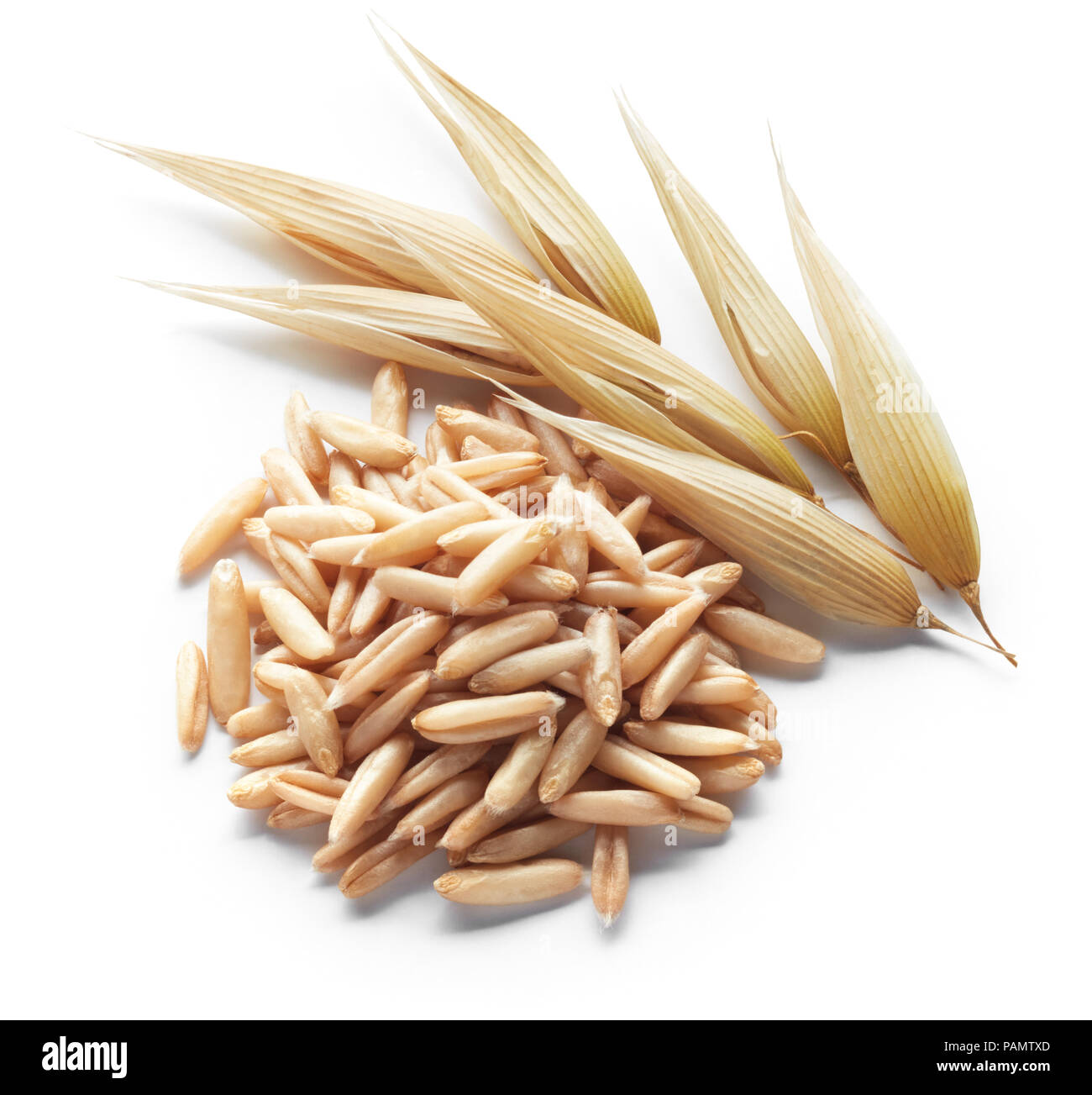 unprocessed oats and its crops isolated on white - Stock Image