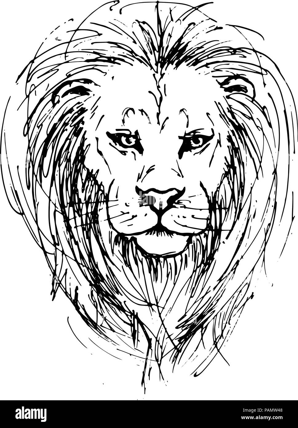 Outline Lion Head Animal Vector High Resolution Stock Photography And Images Alamy Free lion vector on star background to create africa art, danger, aggression, horoscope, jungle, safari, predator, powerful animal, mascot and mythology graphics. https www alamy com sketch by pen of a lion head image213129736 html