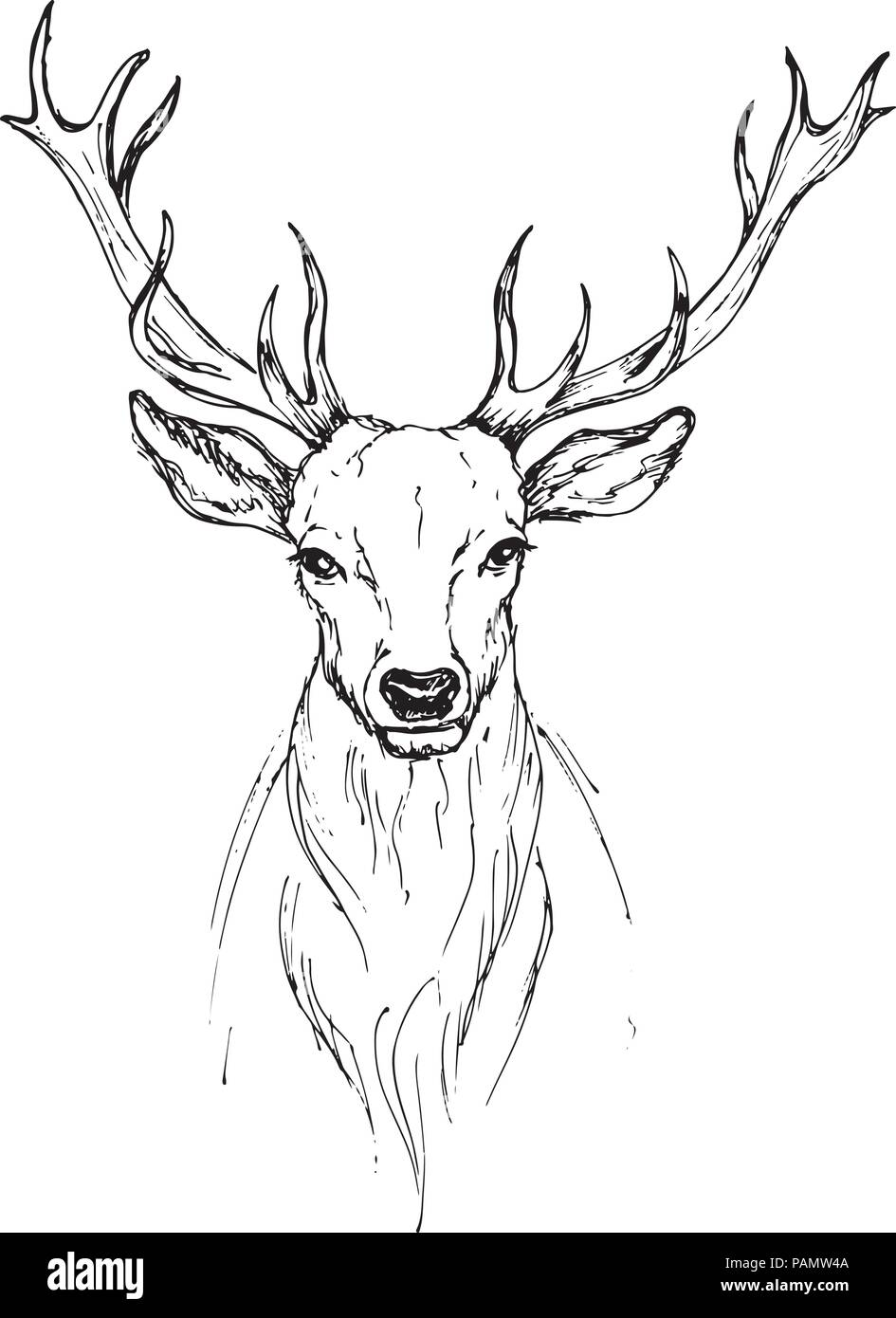 Vector sketch by pen Noble deer front view - Stock Image