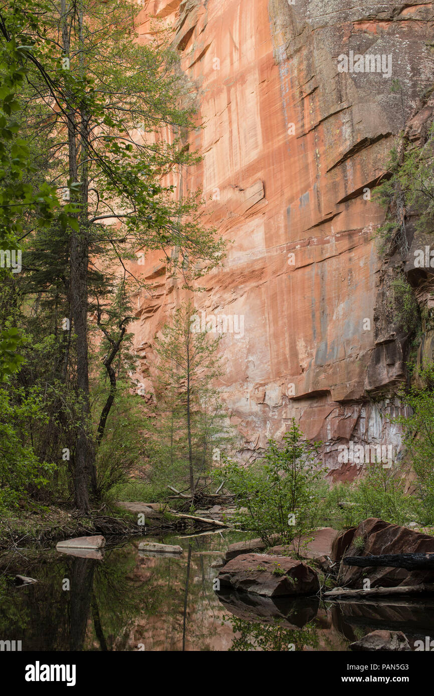 Oak Creek is a gorge carved into the edge of The Mogollon Rim of The Colorado Plateau along the Oak Creek Fault.  It meets with the Verde River. - Stock Image