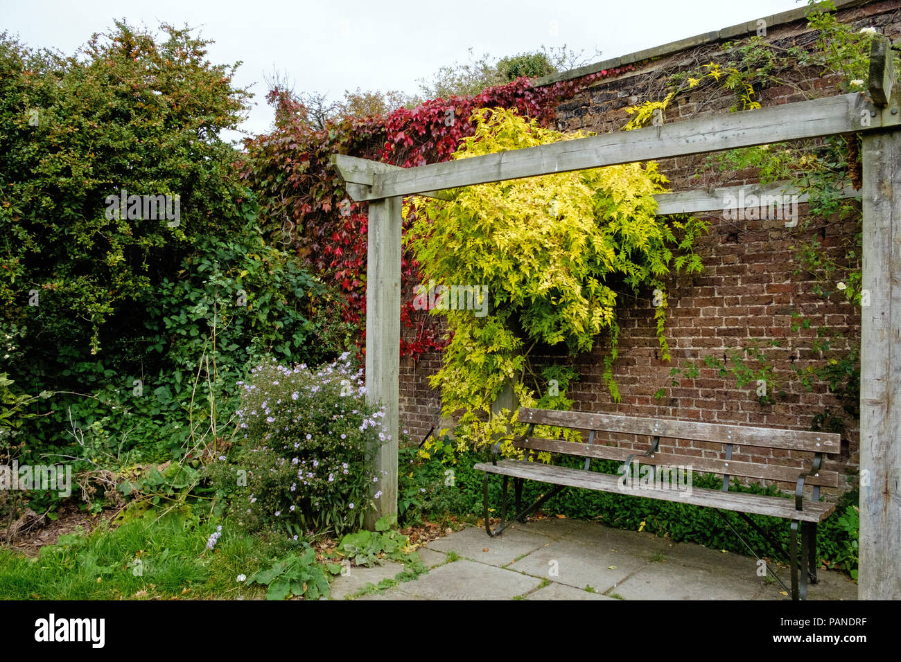 A bench under a pergola at Brockwell Park, Herne Hill, South London, England in autumn, with brick wall behind, red vines and yellow leaves. - Stock Image