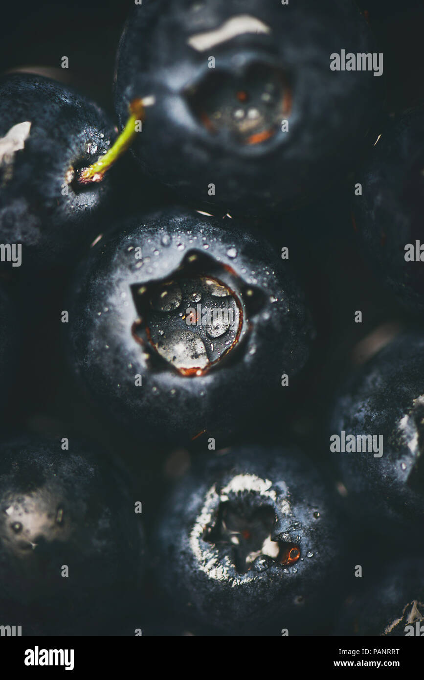 Flat-lay of wet dark forest blueberries, top view, vertical composition - Stock Image