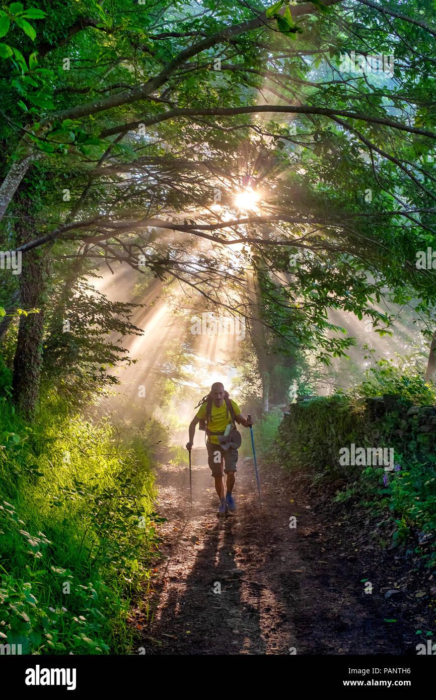 Man hiking on a forest trail on the Camino Primitivo de Santiago, Tineo, Asturias, Spain - Stock Image