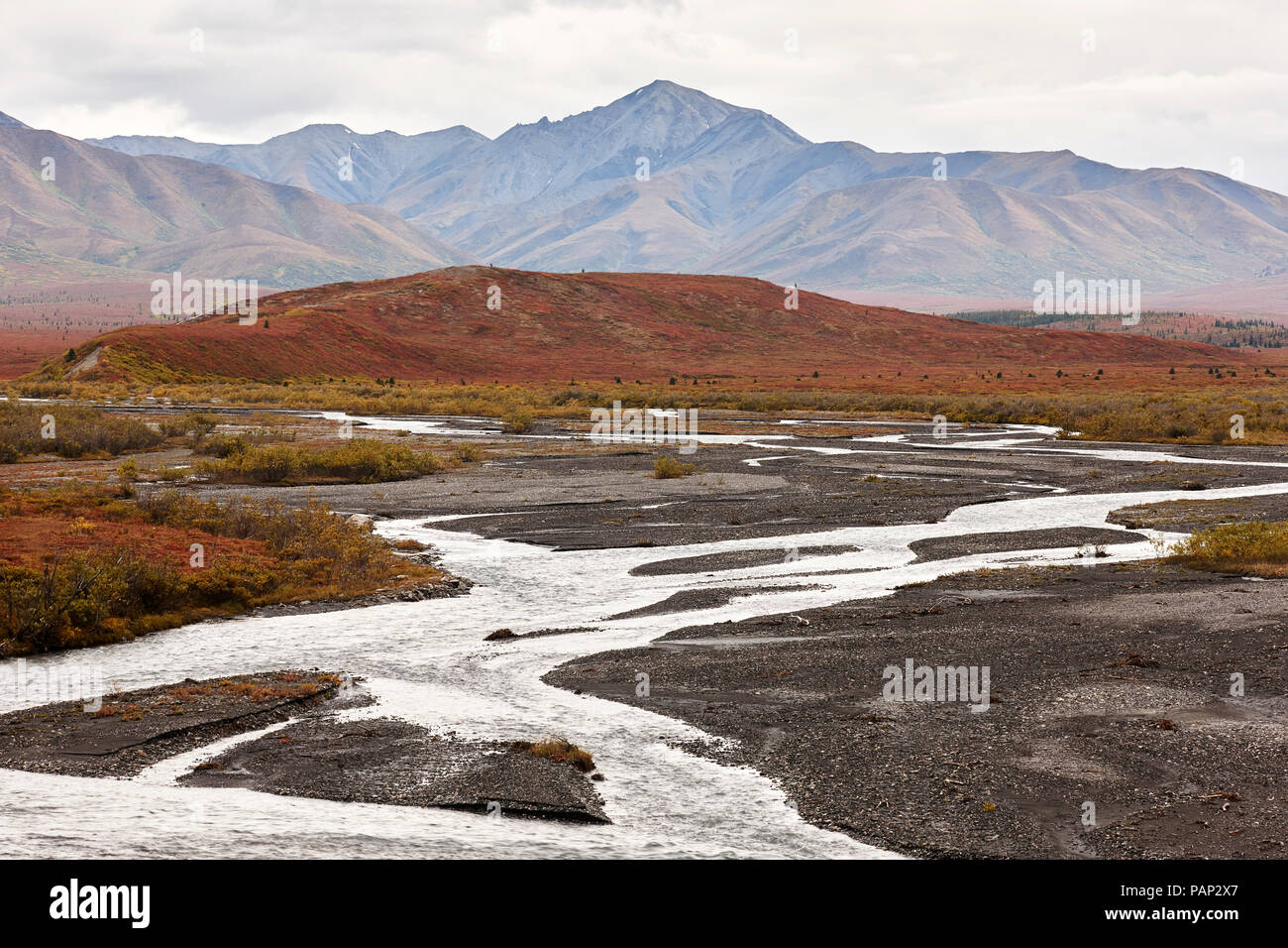 USA, Alaska, Denali National Park in autumn - Stock Image