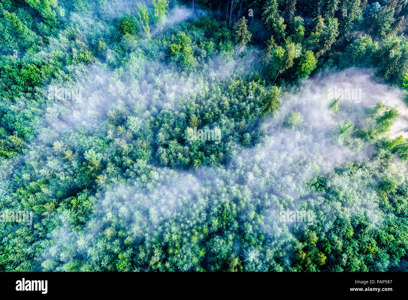 Germany, Baden-Wuerttemberg, Swabian Alb, Aerial view of Schurwald, morning fog - Stock Image
