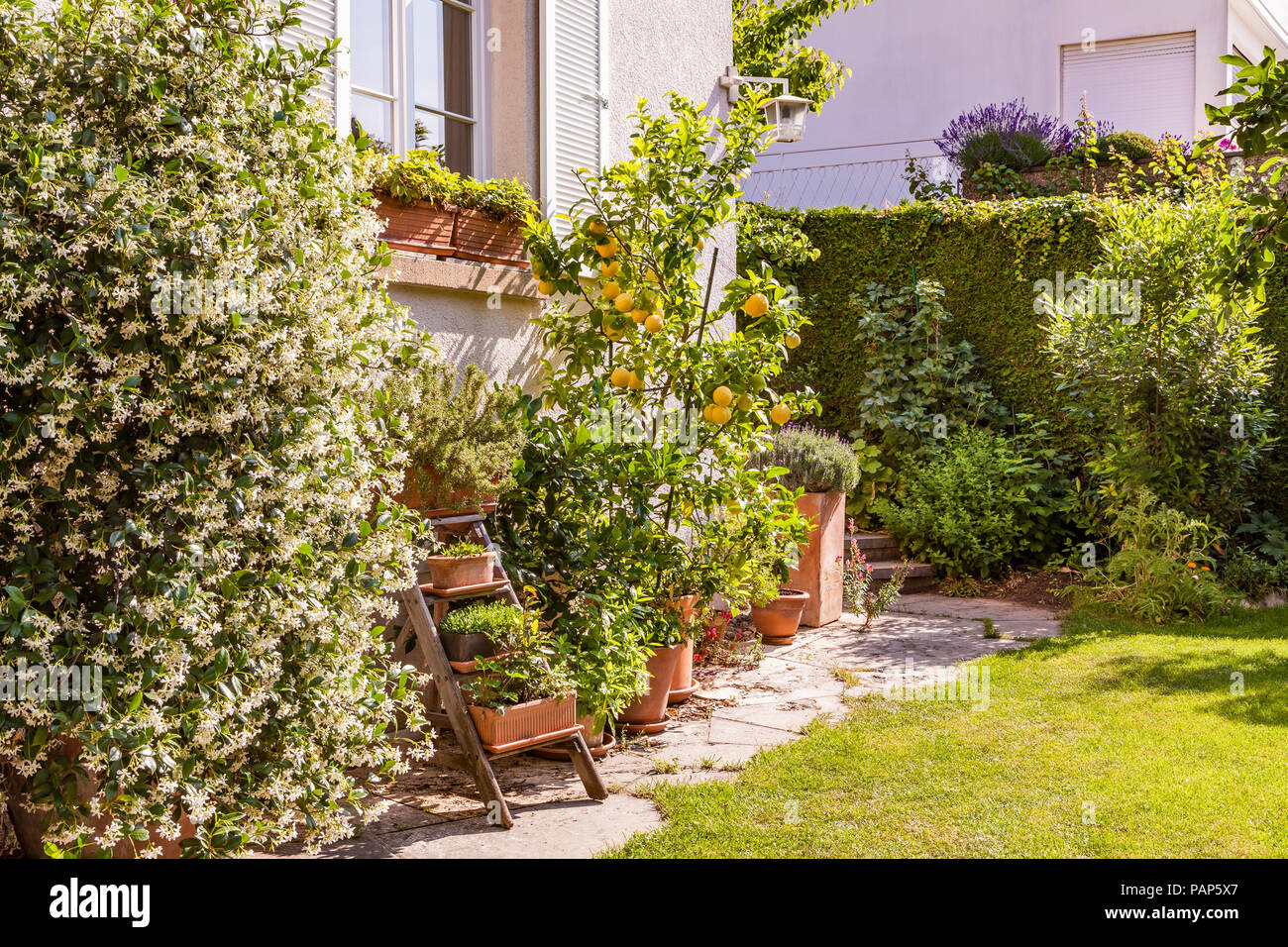 Germany, Stuttgart, potted plants in front of house - Stock Image