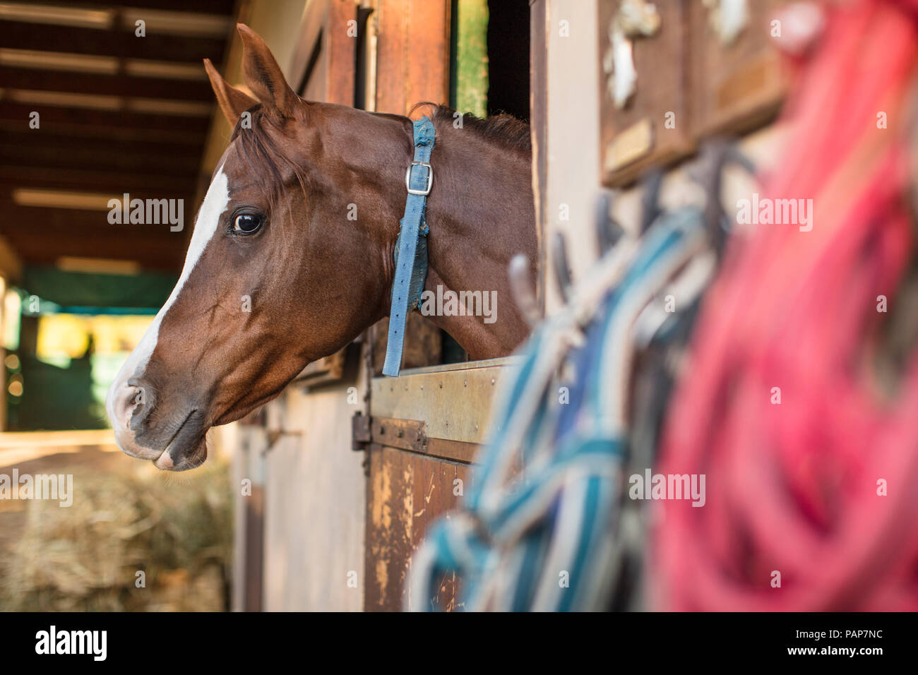 Horse on a farm in stable Stock Photo