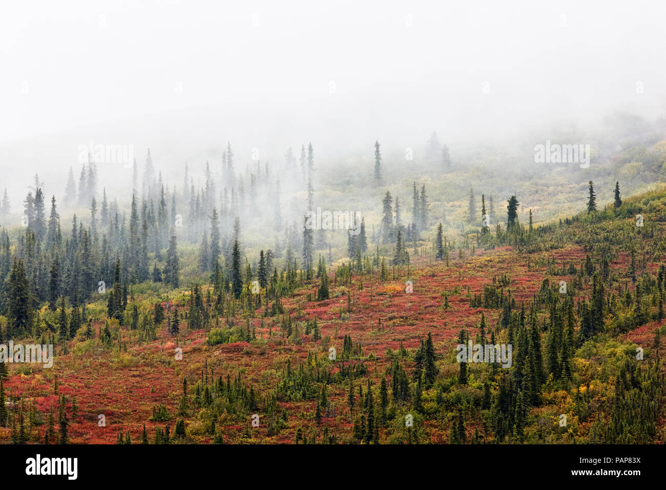 USA, Alaska, autumn in Denali National Park - Stock Image
