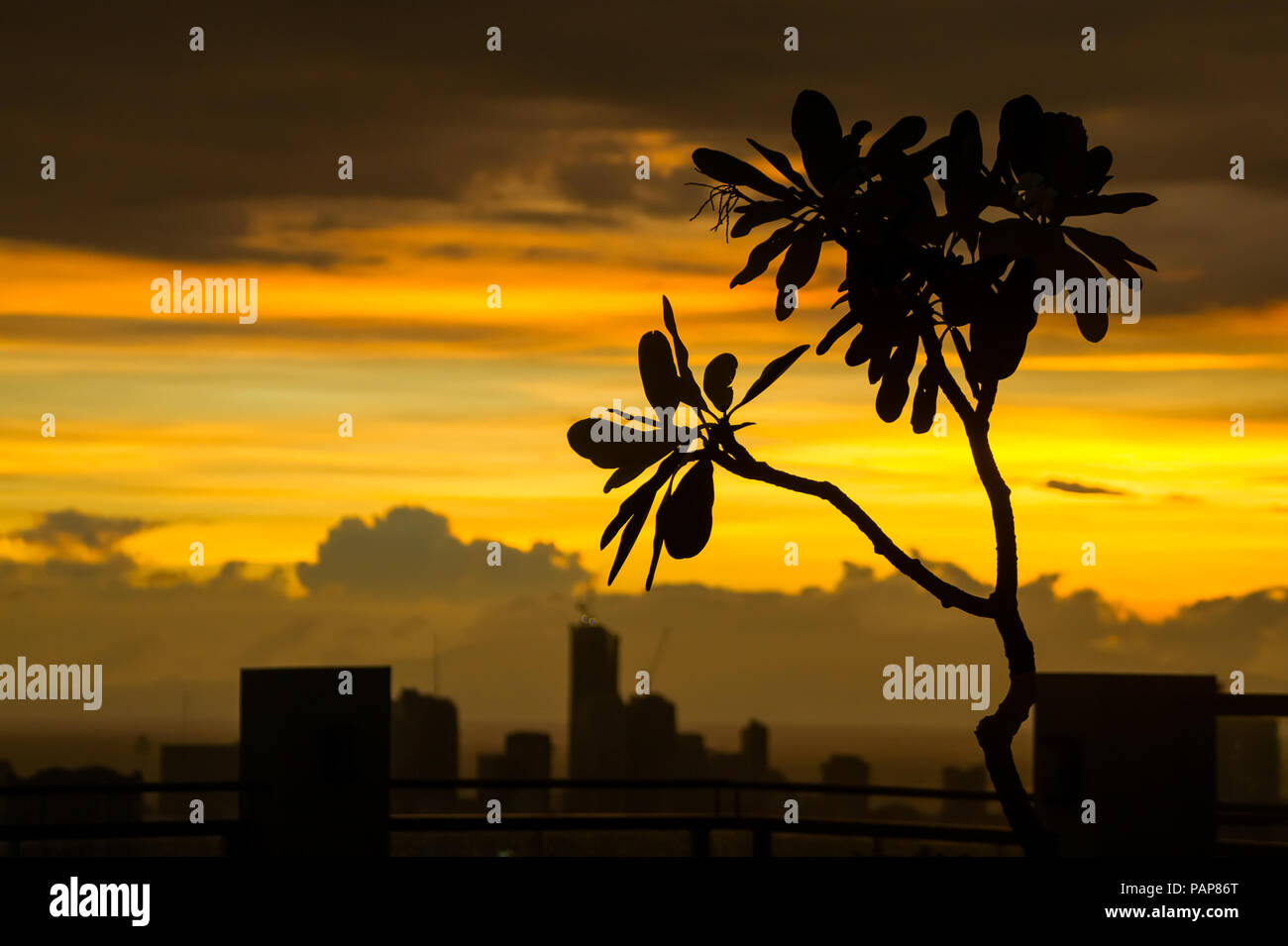 Silhouette of flowering kalachuchi tree with urban building landscape under a beautiful golden cloud sunset - Pasig, Manila - Philippines - Stock Image