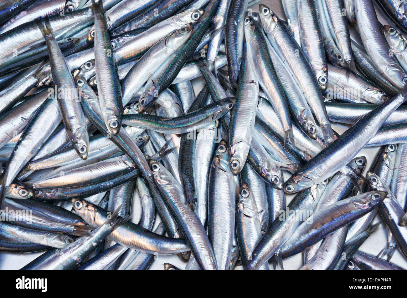 Fresh anchovies with copy space - Stock Image