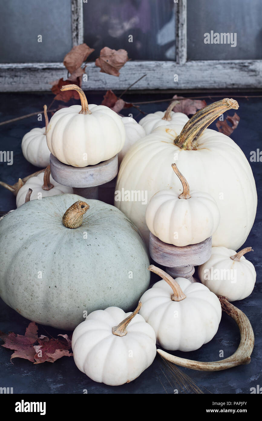 thanksgiving or halloween autumn decorations with heirloom mini white and grey pumpkins and deer antlers against a rustic autumn background