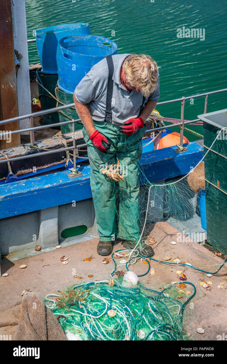 A fisherman carefully untangles the catch from a recent trip from the fine mesh net in the picturesque harbour at West Bay in Dorset. - Stock Image