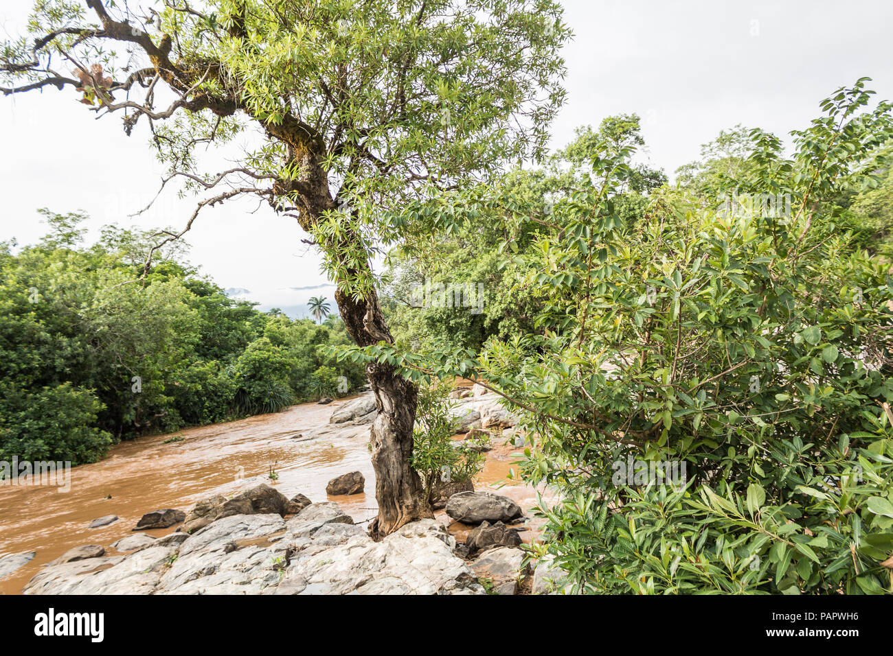 A remote fat flowing stream of water in the rainforest, surrounded by bushes and forest. - Stock Image