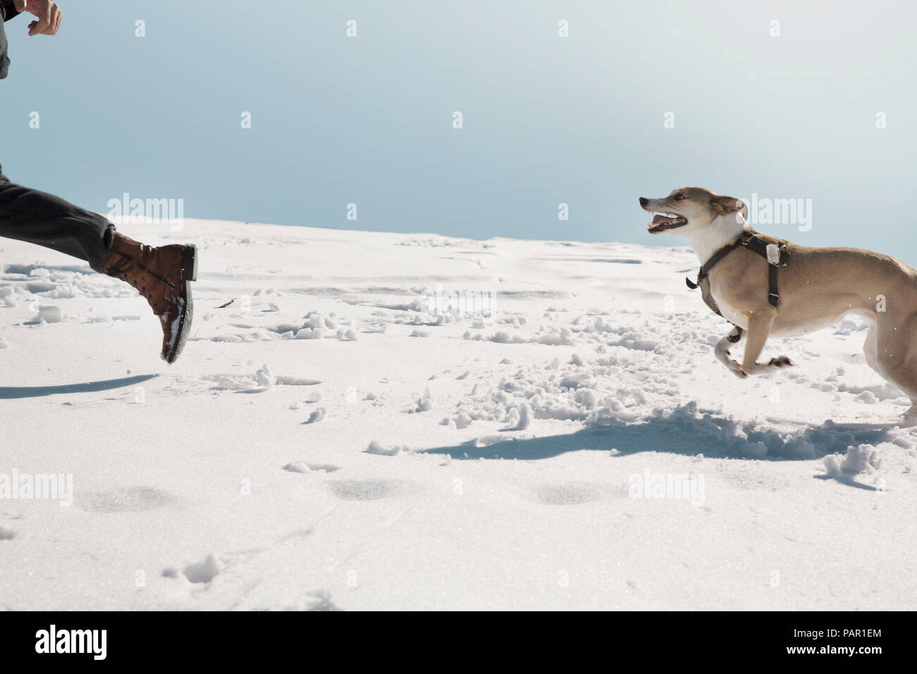 Man playing with dog in winter, running in the snow Stock Photo