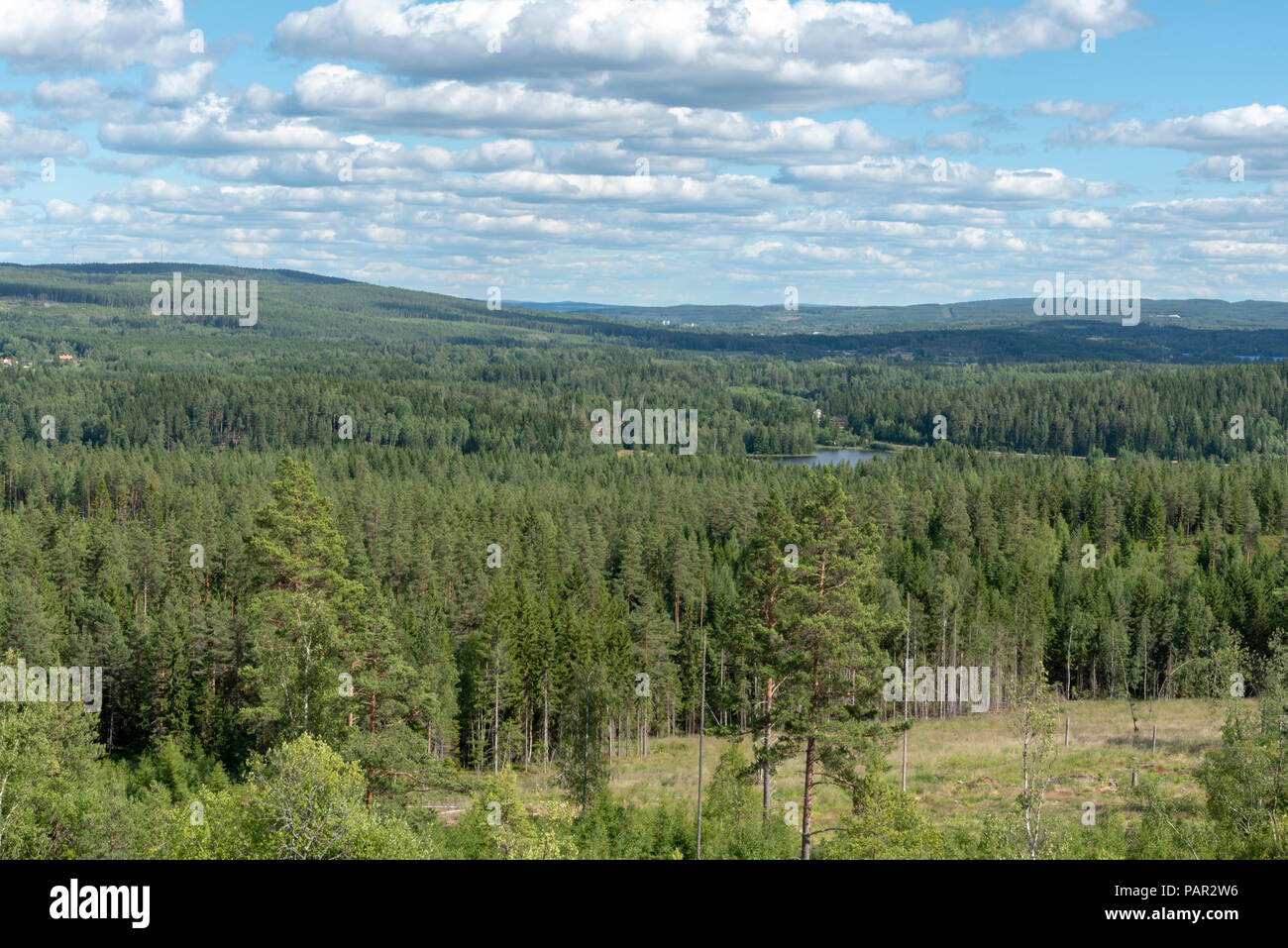 Swedish woodland in summer - Stock Image